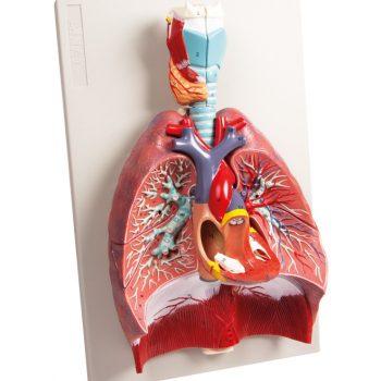 heartmodels-medstore