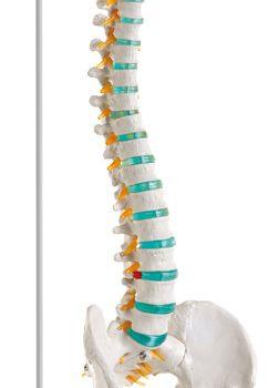 spinalcolumn-medstore