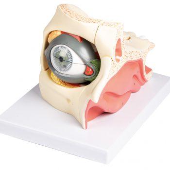 eyemodels-medstore
