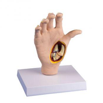 anatomical-medstore