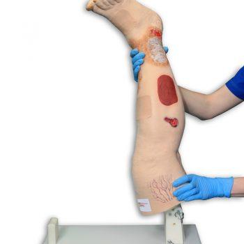 anatomicaltrainingmodels-medstore