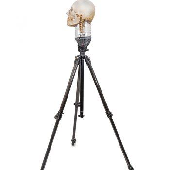 anatomicalmodlesireland-medstore.ie