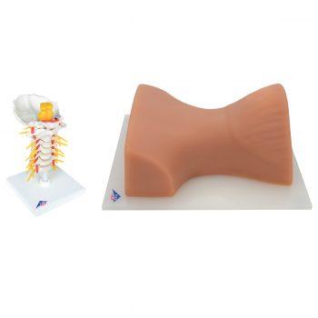 cervicalspinalinjection-medstore.ie