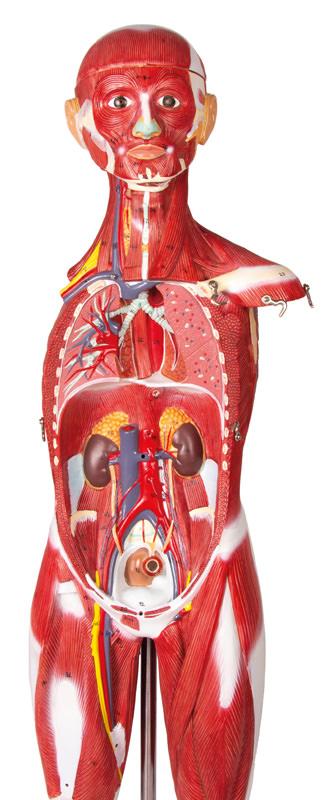 musculature-medstore.ie