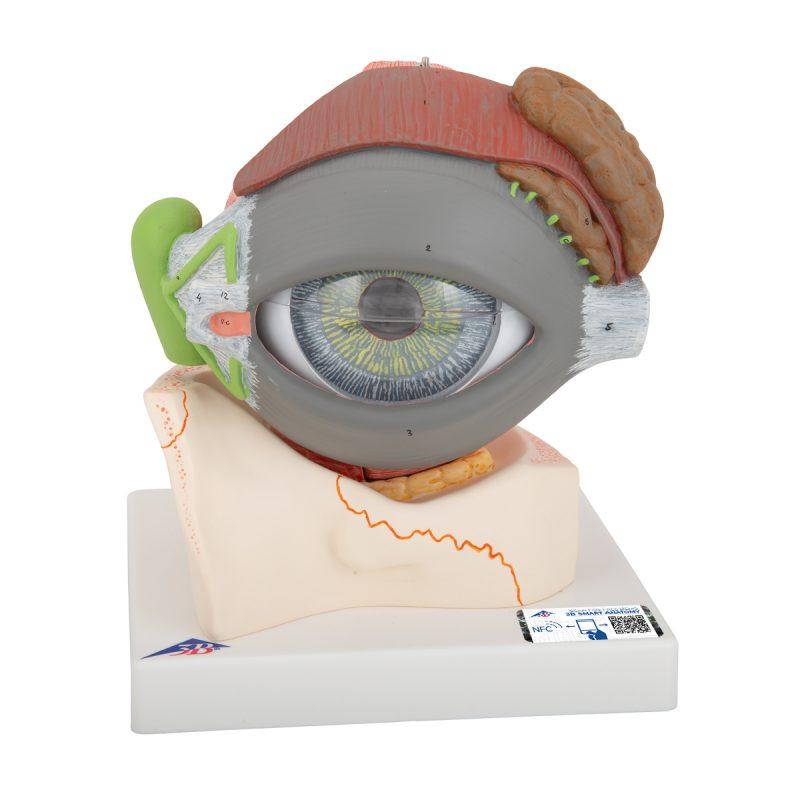 eyemodels-medstore.ie