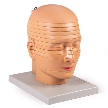 headmodels-medstore.ie