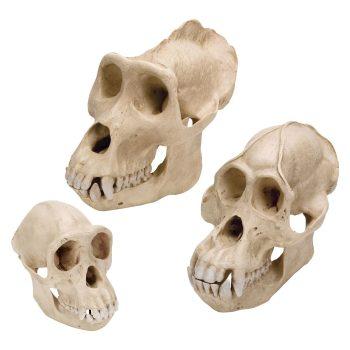 primateset-medstore.ie