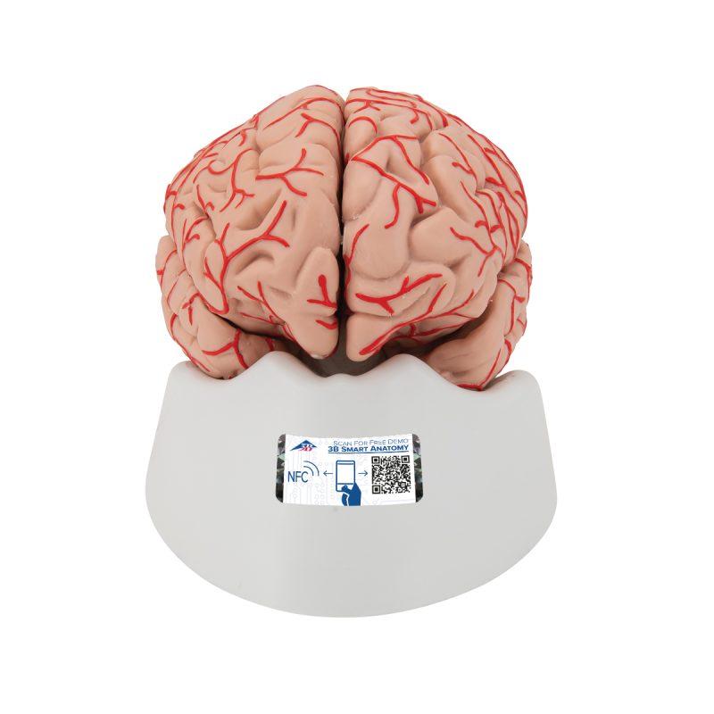 brainmodles-medstore.ie
